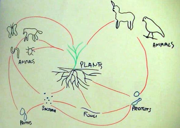 Soil Food Web Diagram