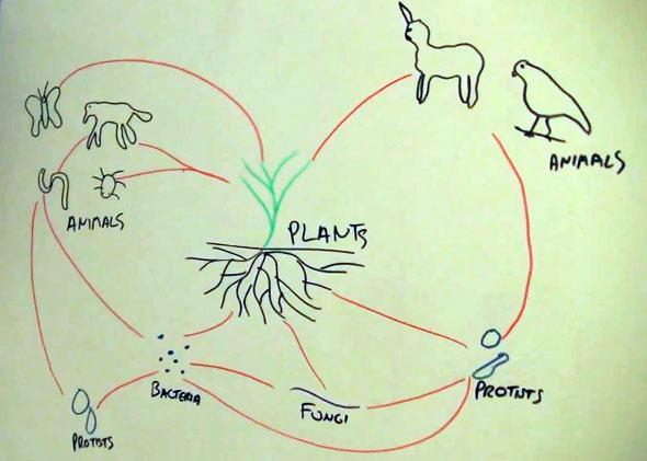 Soil Food Web Diagram